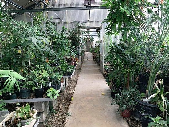 University of California Riverside Botanic Gardens: Greenhouse