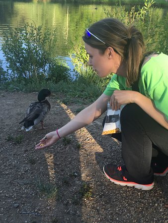 Coffee on the Rocks: Loved the ducks!