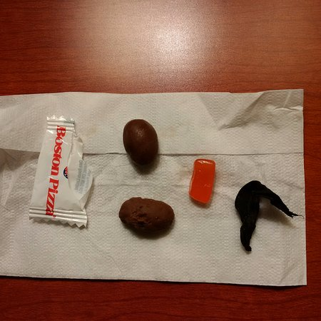 Medicine Hat, Canadá: Chocolate on the floor of a room reserved for owners with pets?!?