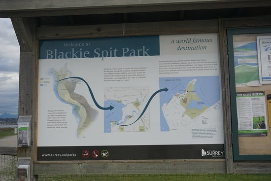 Surrey, Kanada: Blackie Spit Park sign with description of the park and it's history.