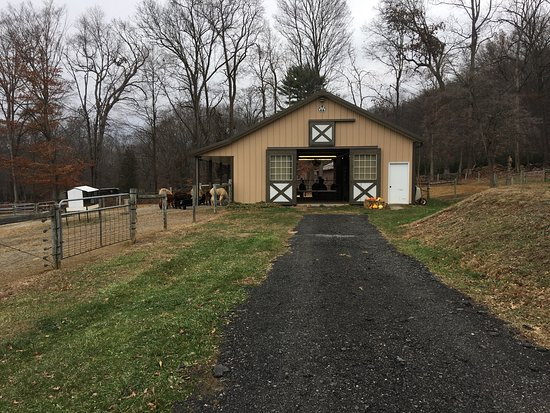 Hackettstown, Nueva Jersey: Highland Airs Alpaca Ranch