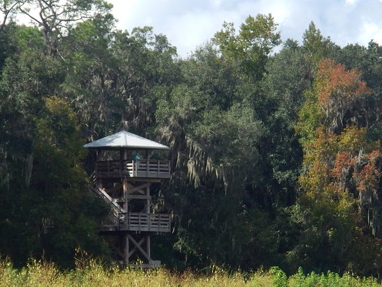 Micanopy, Floride : Observation Tower