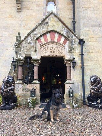 Ландриндод-Уэллс, UK: The Halls pet dog 'Abbey' the friendliest dog in the village 😀