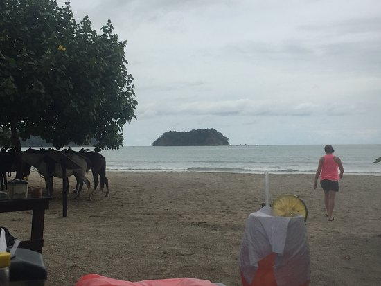 Playa Samara, Costa Rica: View from Tacos's y Tapas - Isla Chora and horses on beach.
