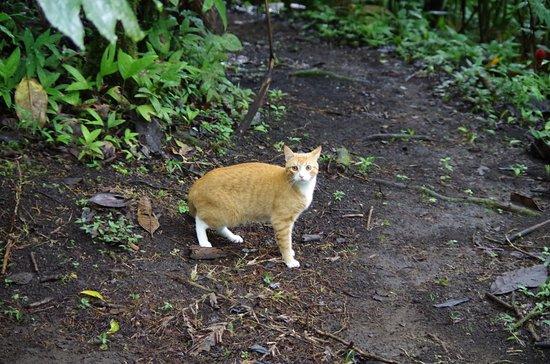 San Vito, Коста-Рика: House Cat