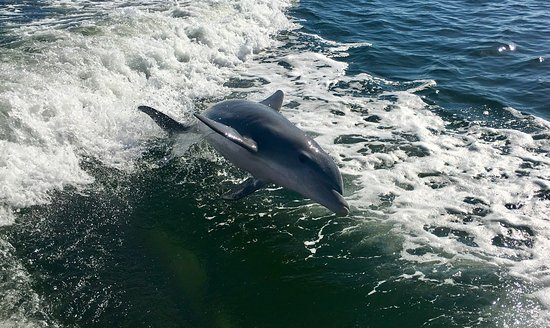 Cortez, FL: Spent a great couple of hours with Captain Patsy!  Dolphins, lots of sand dollars - a great day