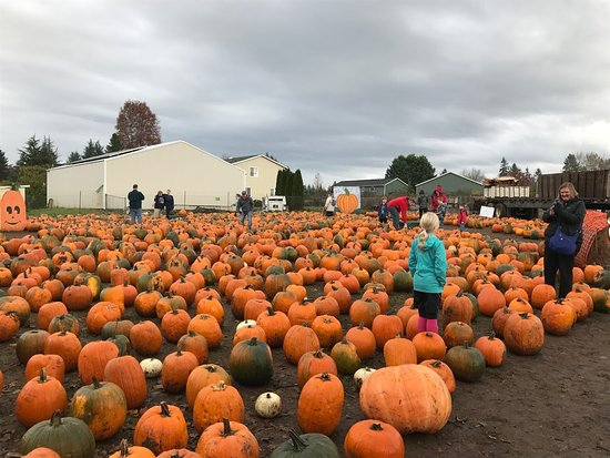 Boring, OR: Liepold Farms pumpkins