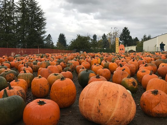 Boring, OR: Pumpkins!!