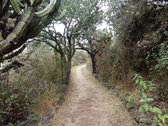 El Charco del Ingenio: Beautiful trails
