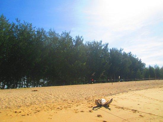 Daet, Filipinas: Powdery Sand
