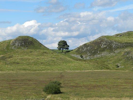 Northumberland National Park, UK: An iconic image