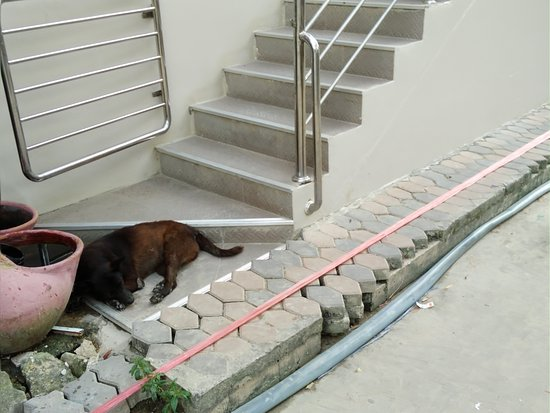 Chilli Hotel & Restaurant: Jump over the dog and the broken sidewalk to get to your room!