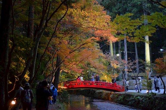 Mori-machi, Japón: DSC_0731_20161126_369DSC_0731D5300_large.jpg