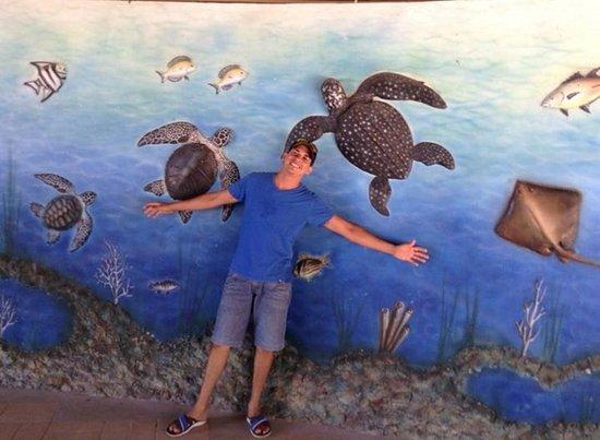 Aracaju Aquarium - Tamar: 03001d5f_large.jpg