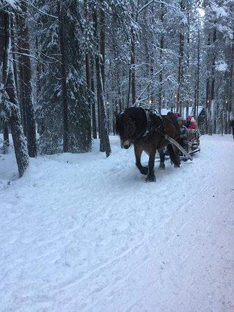 Norrbotten County, Sweden: FB_IMG_1480177254980_large.jpg