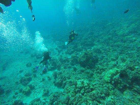 Wailuku, Hawái: Snuba