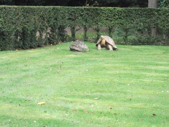 Sandringham, UK: Wooden Tortoise