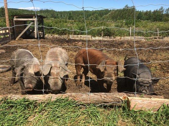 Ferme du Porc-Pic