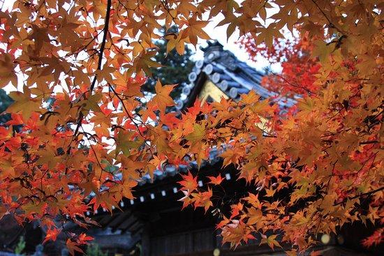 Kuwayama Shrine