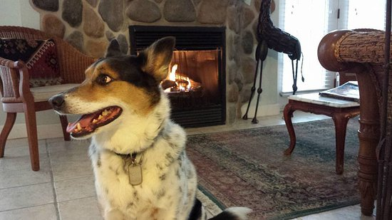 Alton, IL: Our dog enjoying the fireplace.
