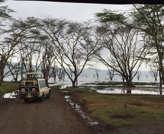 East Africa Adventure Tours and Safaris - Day Tours: no zoom, taken on cell phone.