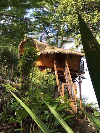 Vieux-Habitants, Guadalupe: photo0.jpg