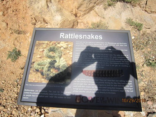 Manitou Springs, CO: Did you say RATTLESNAKE?