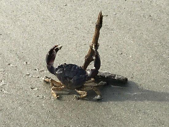Saint Simons Island, GA: photo4.jpg