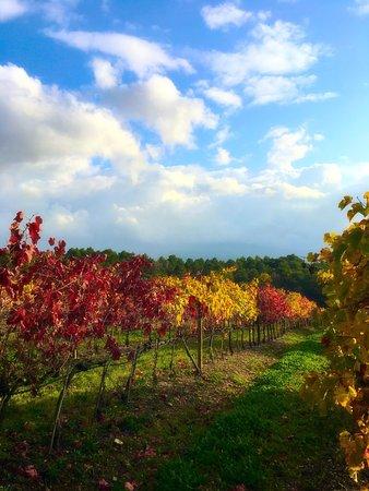 Montalcino, İtalya: photo1.jpg