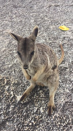 Mareeba, Austrália: グラナイト コージ ネイチャーパーク
