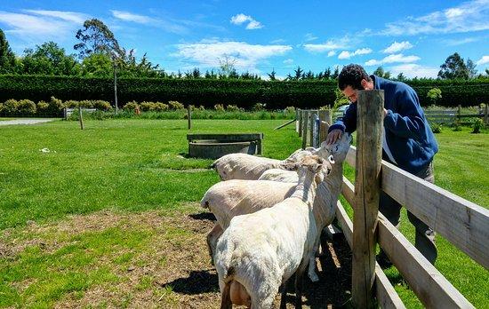Timaru, Nowa Zelandia: 20161127_121256_HDR_large.jpg