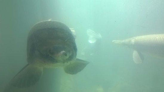 Athens fish