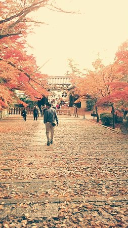 Префектура Киото, Япония: 京都光明寺美拍
