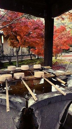 Kyoto Prefecture, Japan: 京都光明寺美拍