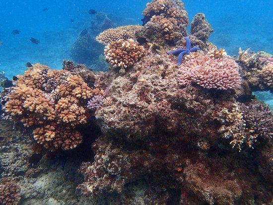 Toberua Island, Fiji: Snorkeling at Toberua