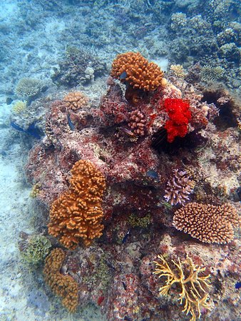 Toberua Island, Fiyi: Snorkeling at Toberua