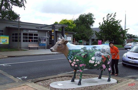 Morrinsville, Yeni Zelanda: I-Site and Cow