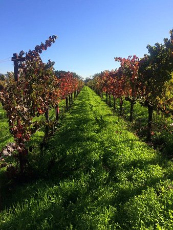 PlumpJack Winery: Really beautiful in November with the Fall colors