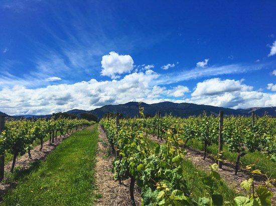 Blenheim, Neuseeland: photo0.jpg
