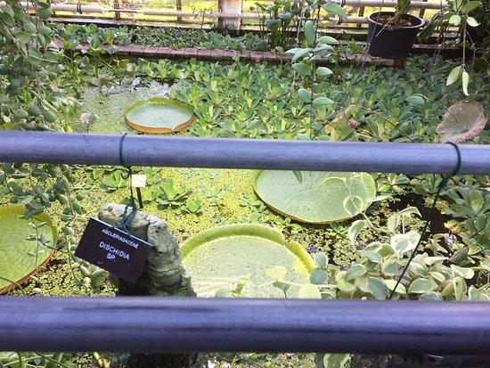 ลุนด์, สวีเดน: Botanical Gardens (Botaniska Tradgarden)