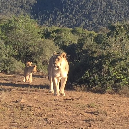 Kwandwe Private Game Reserve, Sudáfrica: Great memories.