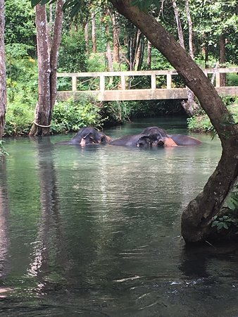 Nosey Parker's Elephant Camp - Private Day Tours : photo1.jpg