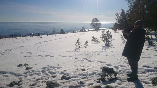 Hölicks reservat ligger på en halvö som heter Hornslandet och ligger utanför Hudiksvall.  Nature