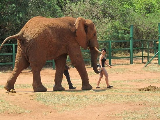Hartbeespoort, Νότια Αφρική: Walking with Elephants was one of the best things I ever did