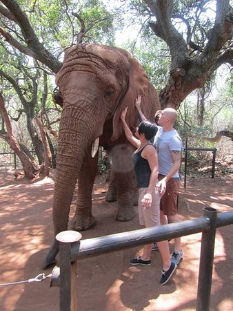 Hartbeespoort, Νότια Αφρική: If you are in a small group the keepers will let you touch and play with the Elephants
