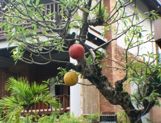 Cepu, Ινδονησία: nice fruit