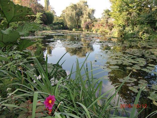 Claude Monet Evi ve Bahçeleri: 池と睡蓮