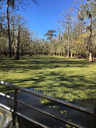 Slidell, LA: The beauty of the swamp