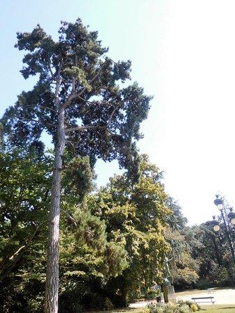 Un bel arbre - Picture of Jardin du Grand Rond, Toulouse - TripAdvisor