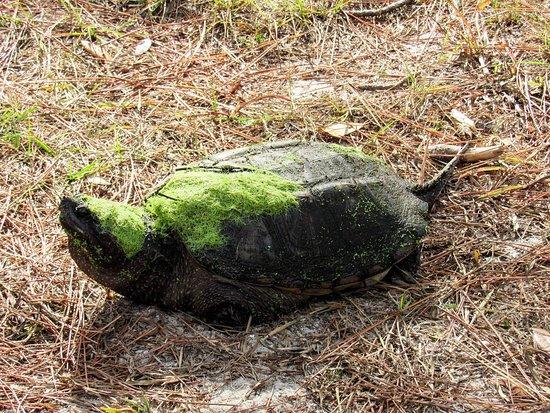 St. Andrews State Park: FB_IMG_1480166157436_large.jpg